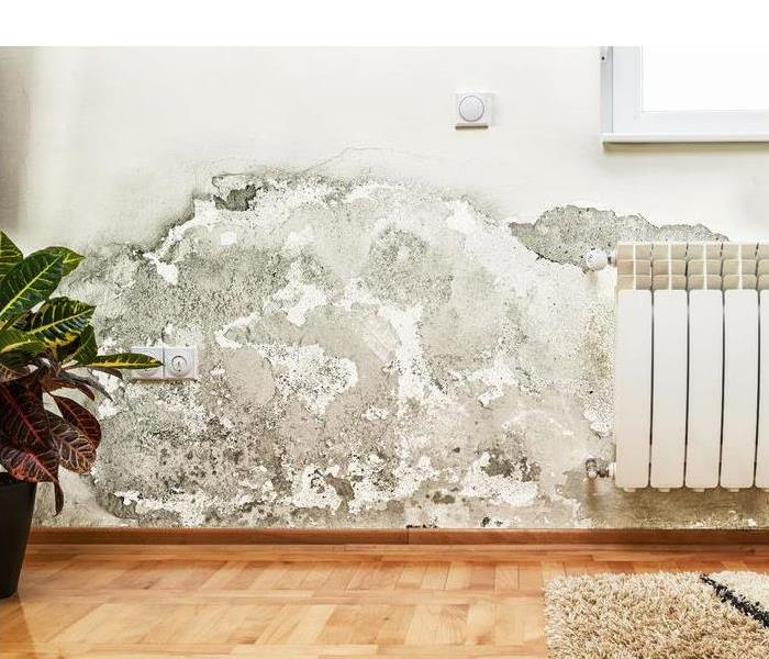 What to do if mold is found in your home?