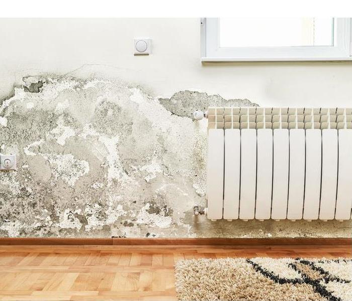 Mold Remediation What to Do if You Find Mold in your Home.