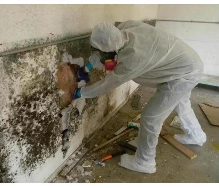 Mold Remediation Different Types of Mold