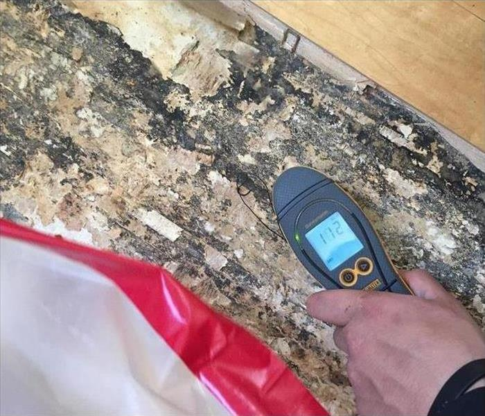 Mold Remediation What to do if Your Meridian/Star/Eagle Home Has Mold Damage